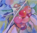 Cherry Branch_Mar_13_sm