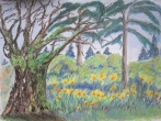 Oak tree_and_Jonquils_Apr_13sm